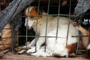 Animal Cruelty - Suffering Dog