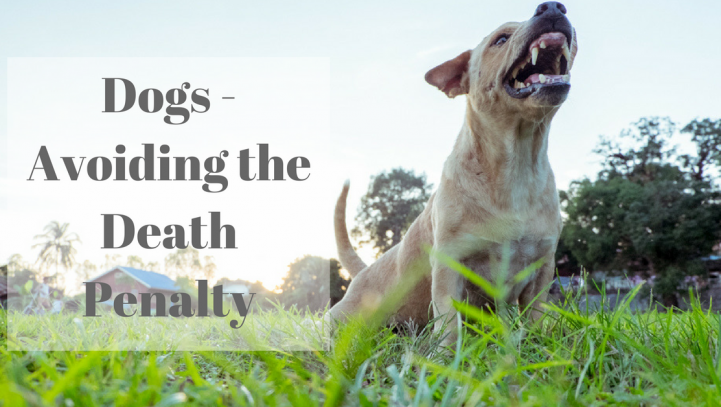 Dogs – Avoiding a Death Penalty