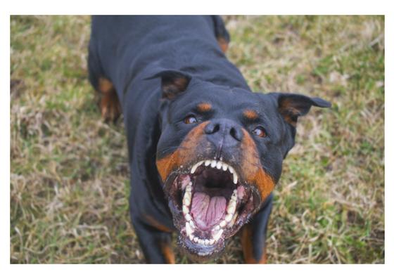 Dogs - Dog Growling