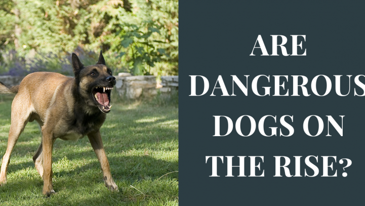 Are Dangerous Dogs on the Rise?